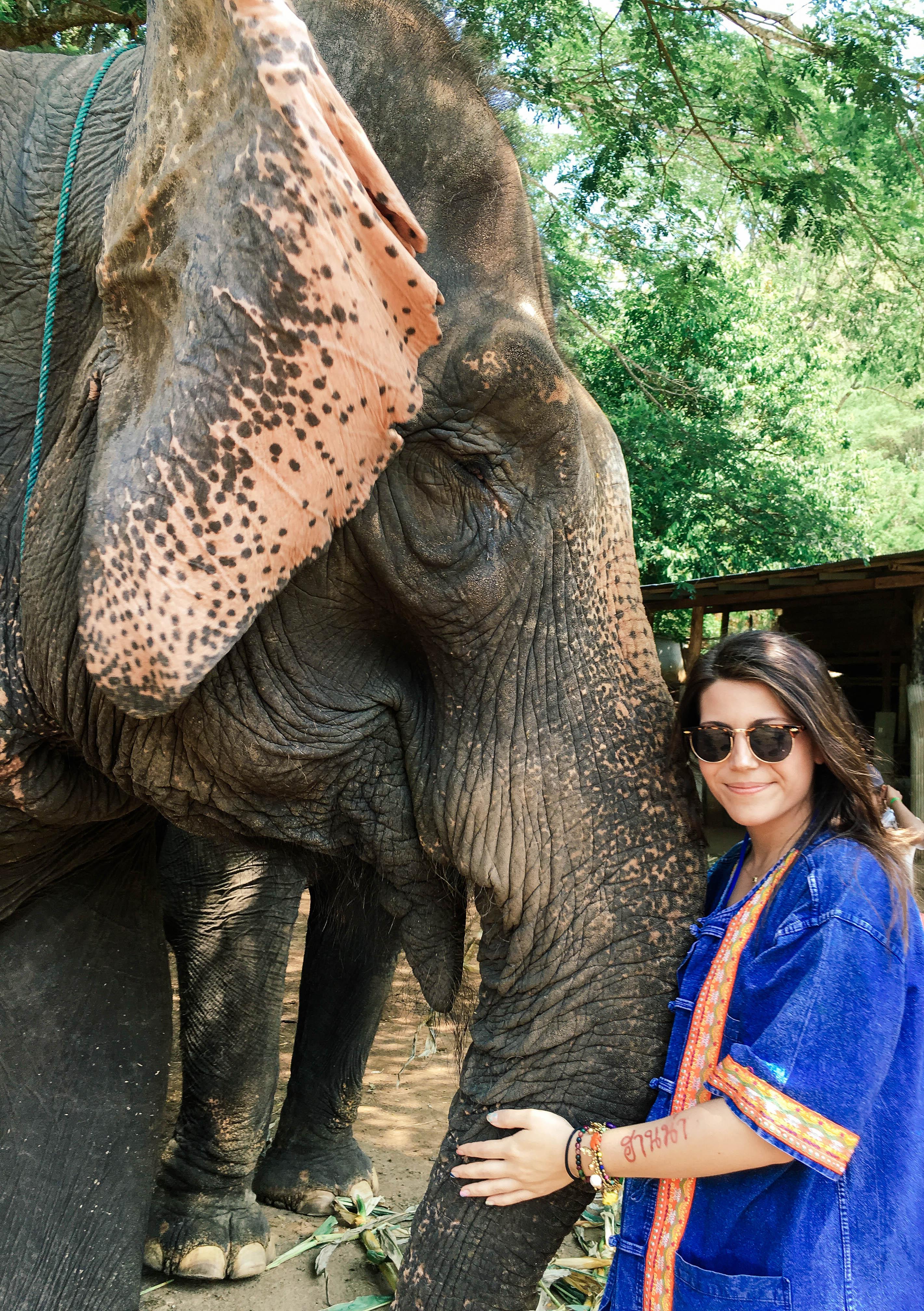 Bobby's Elephant Home